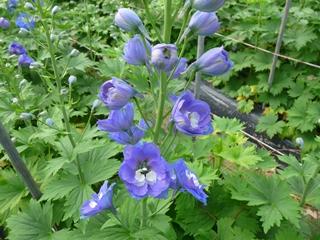 福岡県花卉農業協同組合の「福岡花市場」「北九州花市場」。福岡のお花屋さん検索、切花や鉢物など、「花の文化」の提案を行います